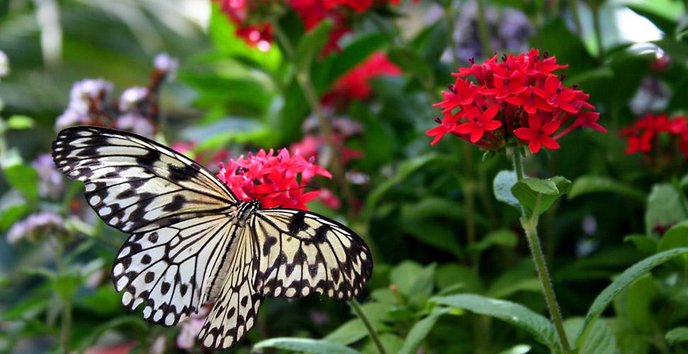 mini jardim curitiba:Atraia borboletas para o seu jardim – Revista VerticalRevista Vertical